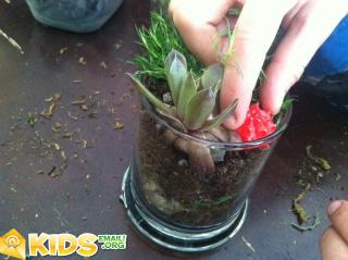 terrariumplant2finish